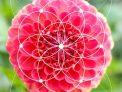 fibonacci numbers golden ratio diploma course